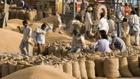 Grains bank in every district should be part of government programme