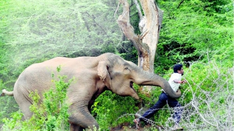 Tuskers continue to wreak havoc in UP, Jharkhand and Odisha