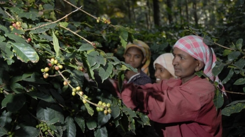 Coffee growers brew up a campaign against sexual harassment at workplace on International Coffee Day