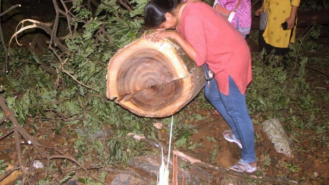 At Mumbai's Aarey Colony, trees butchered @1/minute