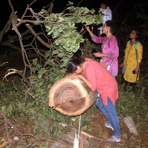 People enter the metro car shed on the spot during tree cutting at Aarey colony in Mumbai late Friday. (PTI Photo)