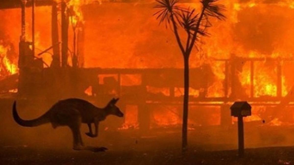 Hundreds arrested for deliberately starting Australian bushfires