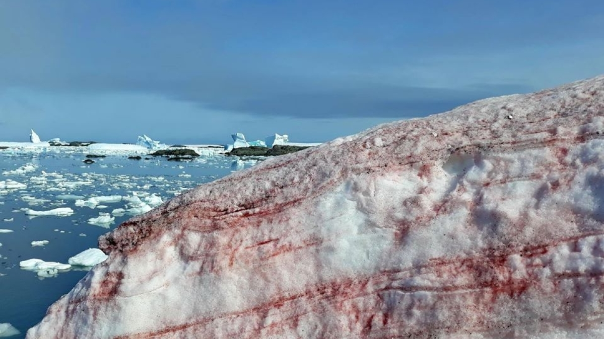 Antarctica snow turns blood-red, Twitterati amazed, Ukraine's Ministry of Education explains