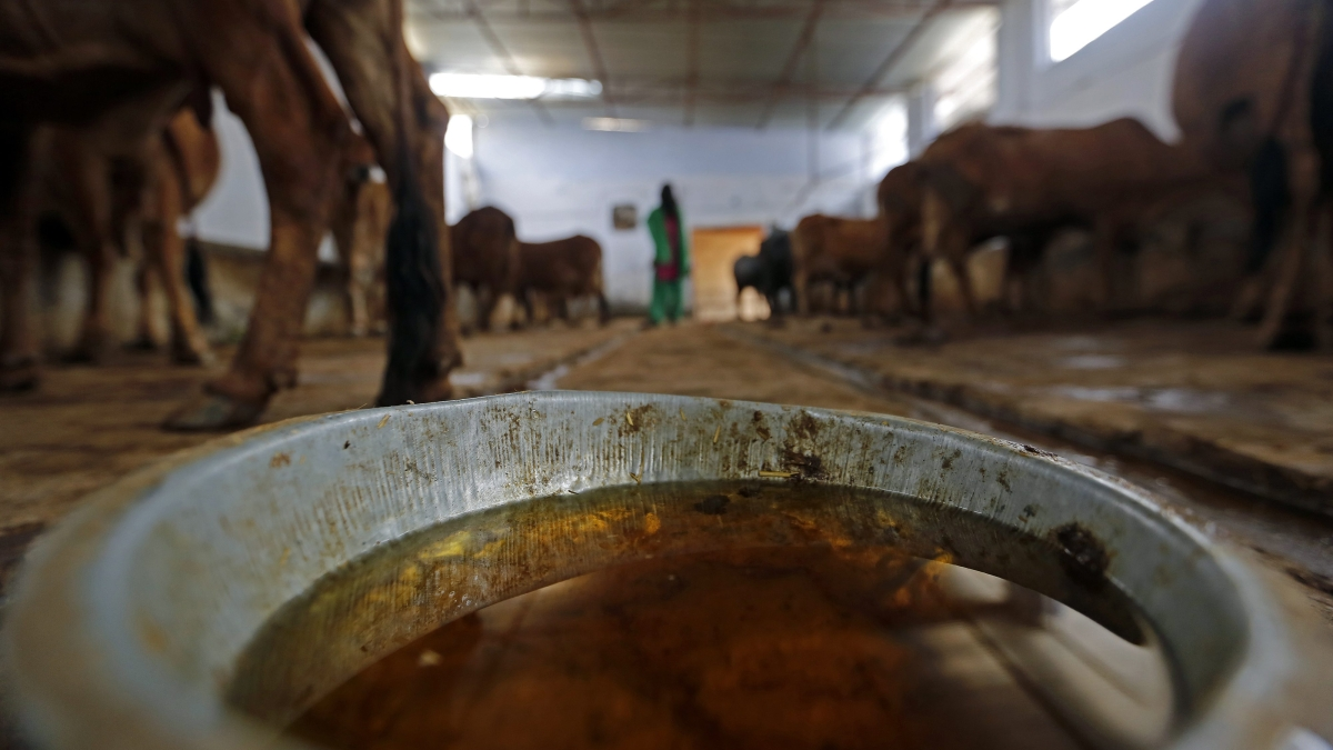 Yogi  plans to brand and sell 'cow-urine' and 'cow-dung' to generate employment