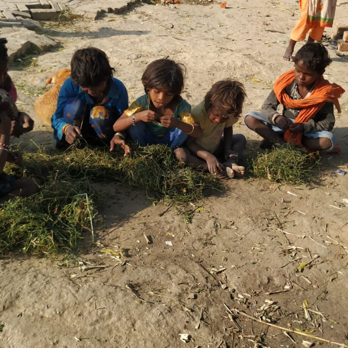 Lockdown impact: In Modi's constituency, Dalit kids forced to eat grass, reporter faces DM's wrath