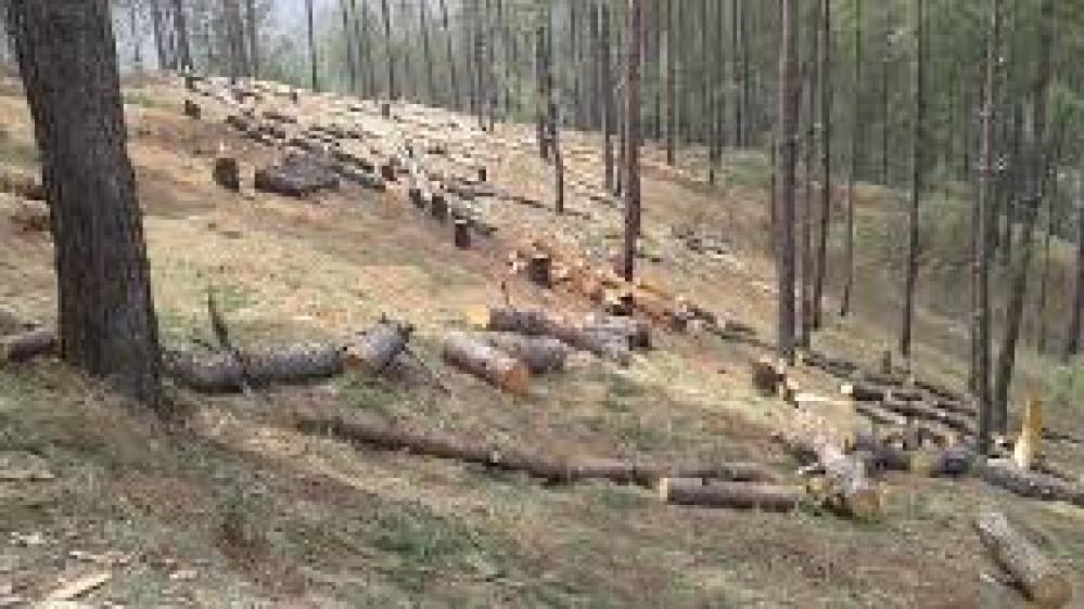 उत्तराखंड में बड़े पैमाने पर हो रही है पेड़ों की कटाई