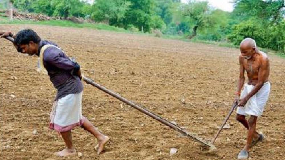 मध्य प्रदेश के शुजापुर में बैल की जगह खेत में हल जोतते पिता-पुत्र