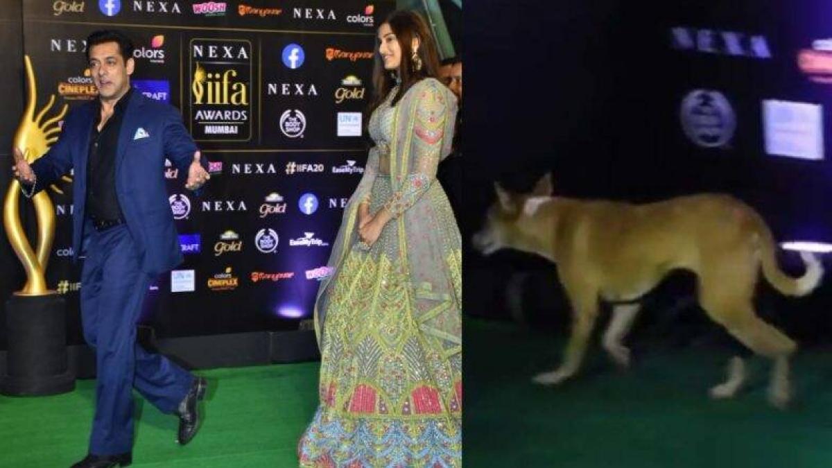 वीडियो: जब सलमान के साथ IIFA समारोह में घुसा कुत्ता, उछल कर भागे क्रू मेंबर्स