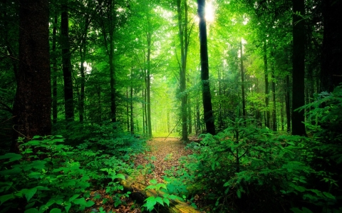 Increase in forest cover in India