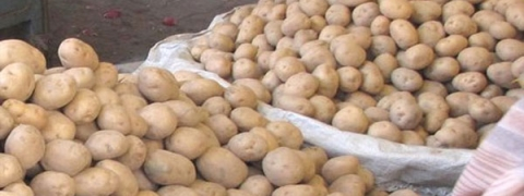 Potato crisis in Odisha: Govt warns ESMA against hoarders