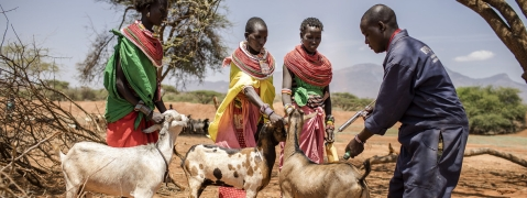 Countries set to take on deadly livestock-killing disease