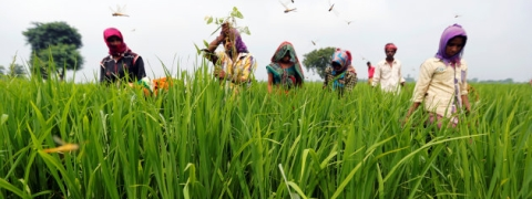 MSP increase, higher procurement of pulses, oil seeds has helped farmers: Agri Ministry
