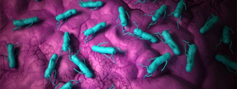 Salmonella - a genus of bacteria - major cause of foodborne illness