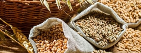 Foodgrains production estimated at 281.27 million tonnes this year