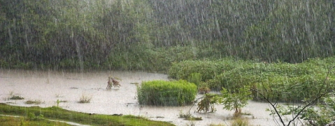Normal monsoon for this year predicted