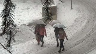 Fresh snowfall on high reaches, rains bring chill back in HP
