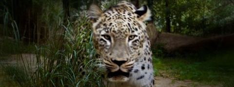 Elderly woman attacked by big cat in Gujarat