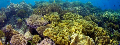 Great Barrier Reef: Mass decline in 'coral babies'