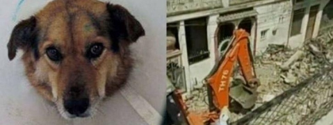 Dog helps save 30 lives in fire
