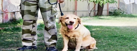 TTD dog squad excelled during training session at Mangalagiri