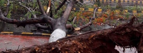 Cyclone Fani: Trees uprooted, villages submerged