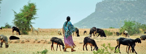Severe drought looms over rural India
