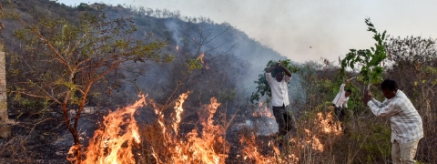 Attempt for rejuvenation of forest destroyed in fire in Bandipur hills