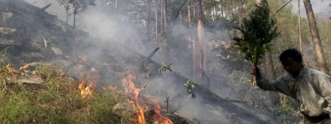 Heat wave causing forest fires in Kangra