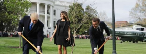 Tree planted to mark Trump-Macron friendship dead