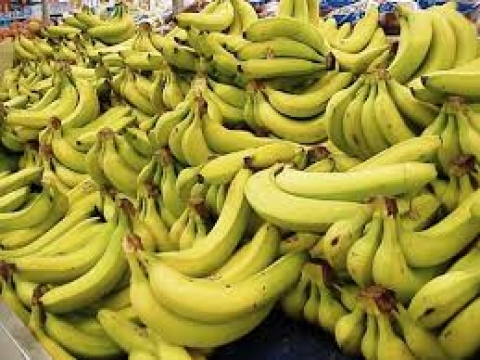 Banana Farmers in Kerala forms Association for resolving issues