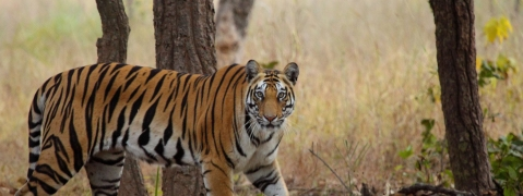Buffer Zones will be added to Tiger Reserves in Nagarahole National Park
