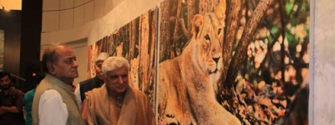 Photo exhibition on 'big cats'