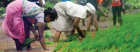 Bengal Govt giving Rs 8,000 cr loan to farmers