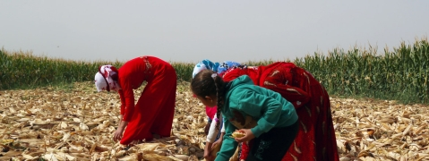 Crop yields are up in Syria, but higher prices still cause major strain