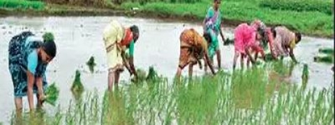 Rythu Bandhu: Rs 7,254 cr assistance to be provided for farmers