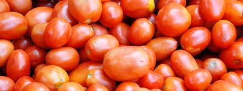Tomato price going through roof to ₹80/kg