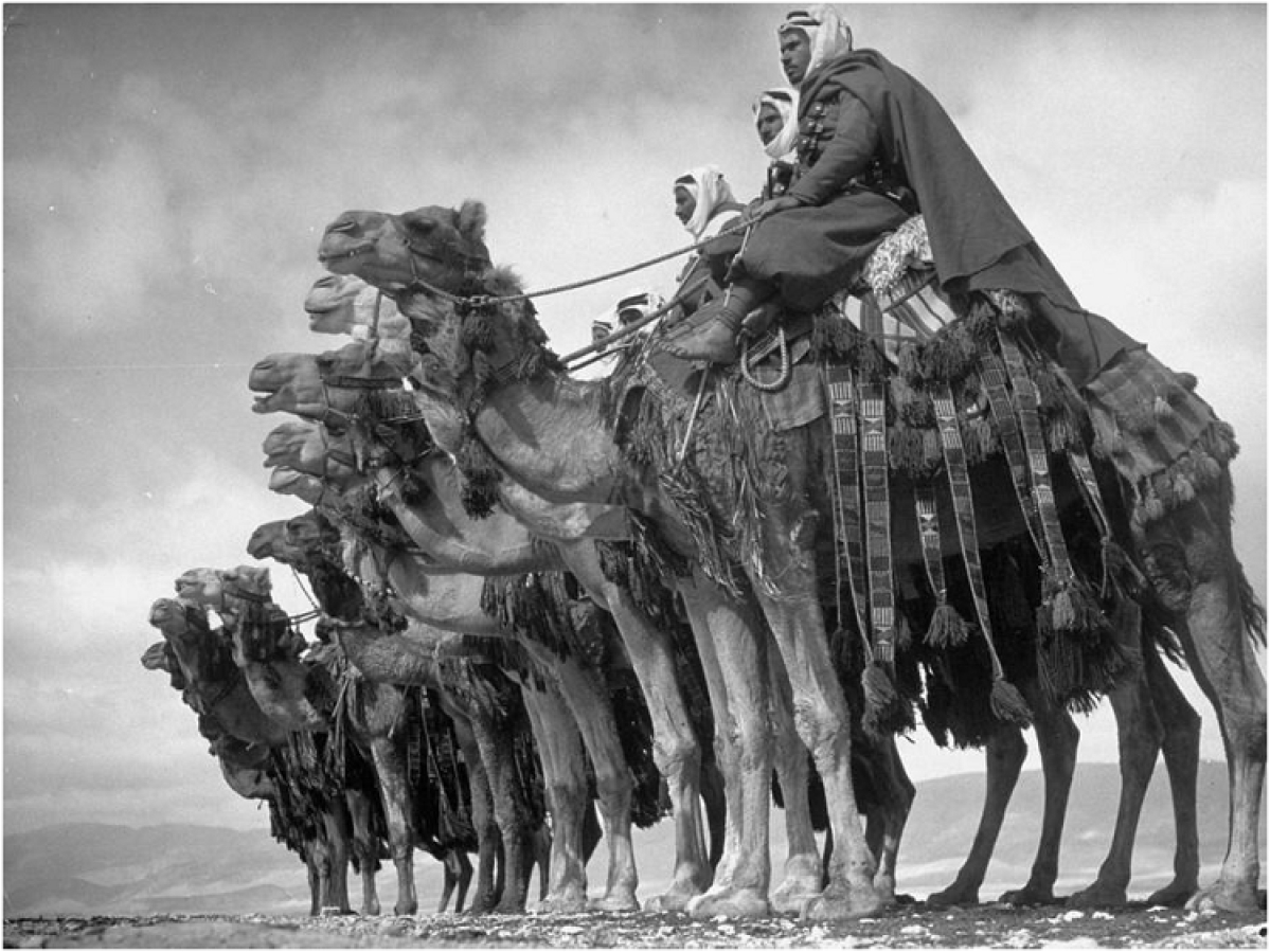 Members of the native Bedouin camel cavalry called Meharists commanded by the officers of the French expeditionary force, pose on their she-camel mounts in the desert near Damascus. May 1940. This photo has repetitive patterns (camel's bodies) to create a sense of symmetry guiding the viewer from the left to the right side of the frame. Photo is tightly cropped so that the entire focus is on the subjects.