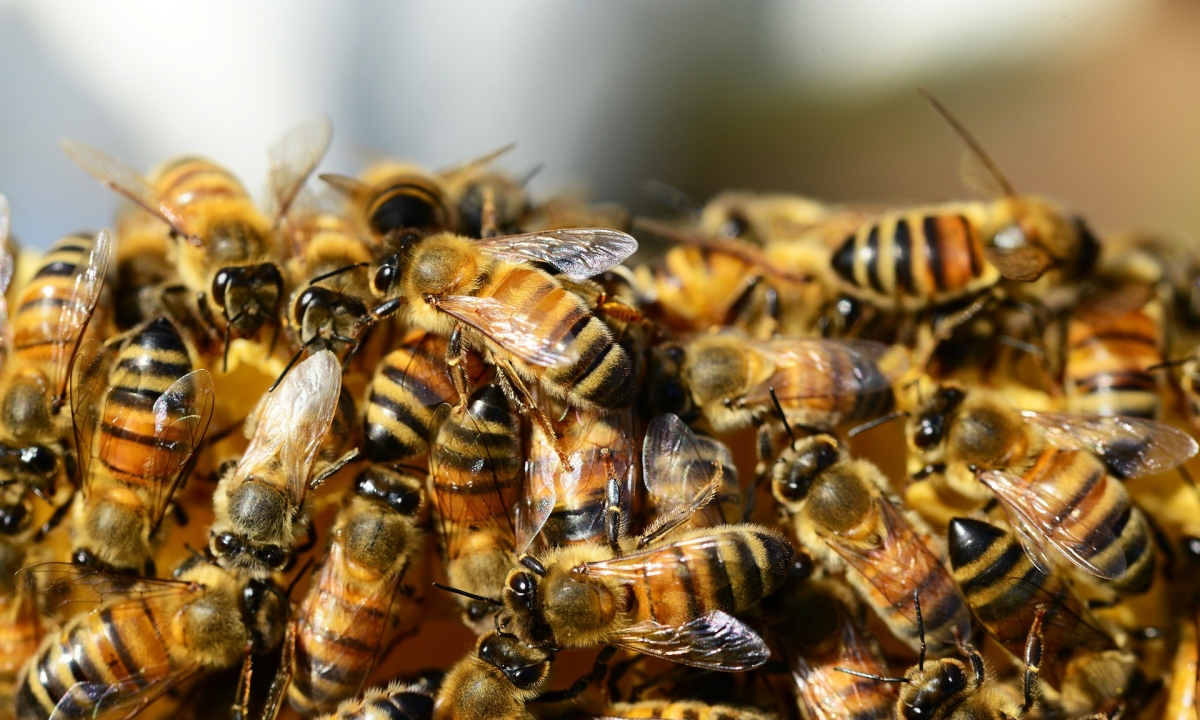 Gujarat: 21 students hospitalised after bees attack school