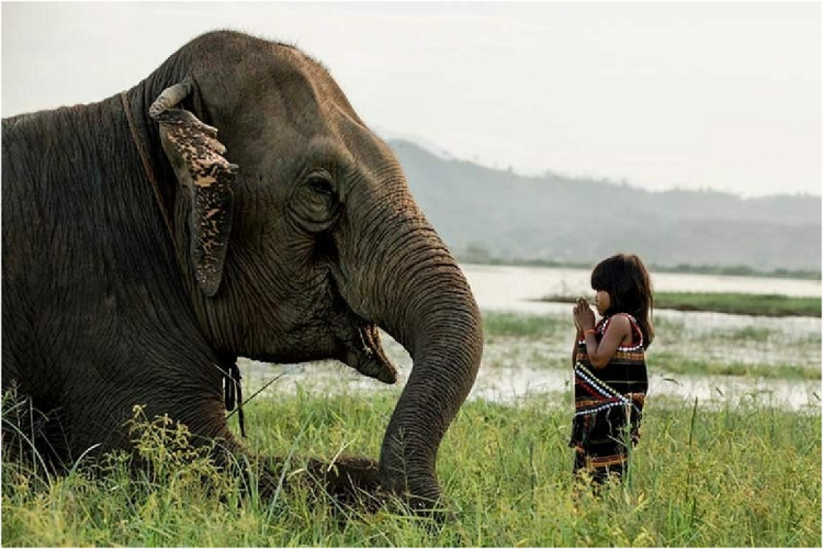 Best Friends – The elephant occupies a major part of the frame and adds visual weight due to its size and color. The girl is facing the elephant and the viewers eyes again goes back to the elephant.