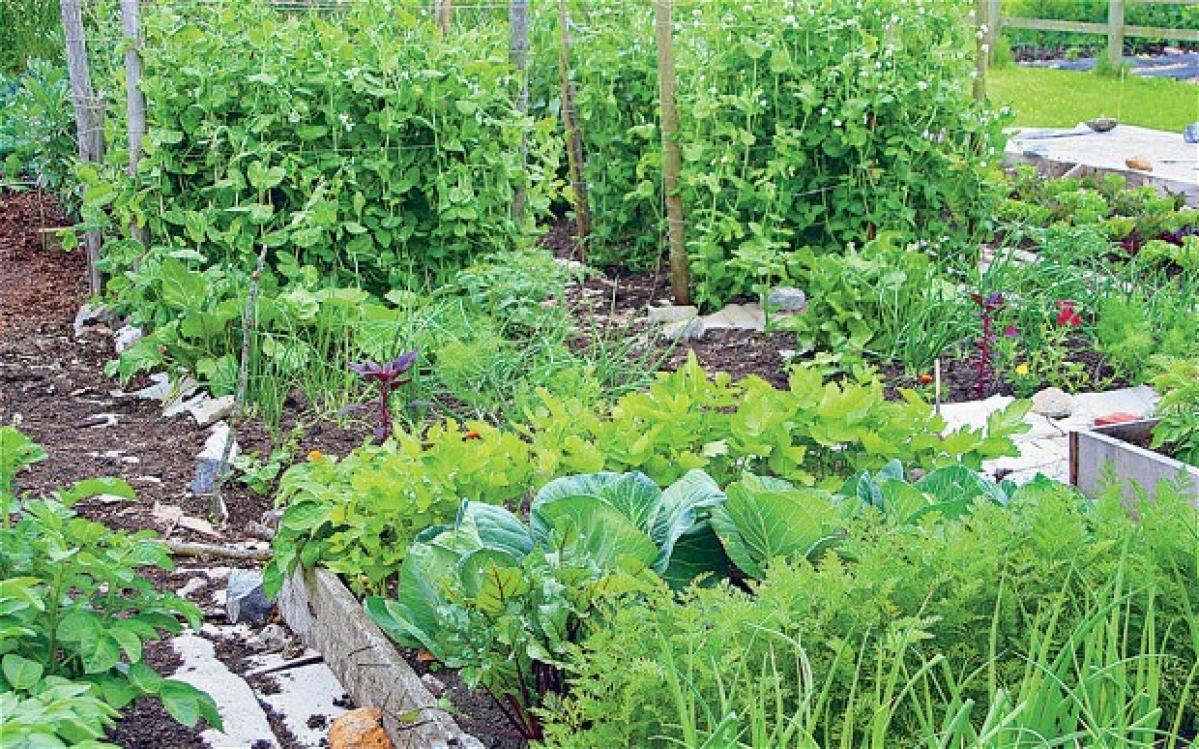 20 वर्ग फुट के किचेन गार्डन में उपजायें सालभर की सब्जी