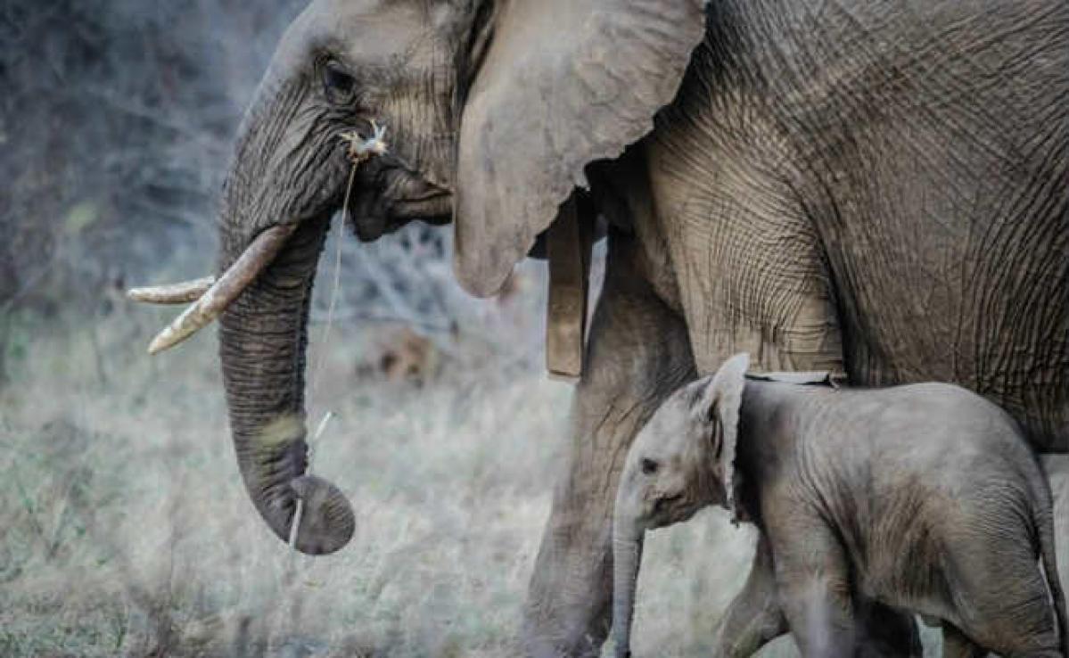 हाथियों का झुंड निमाटांड़-नावाडीह पहुंचा, मचाया उत्पात