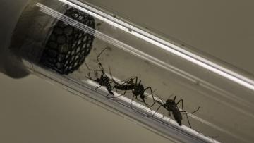गूगल की पैरेमट कंपनी ने बनाया है मच्छरों के खत्म करने का प्लान