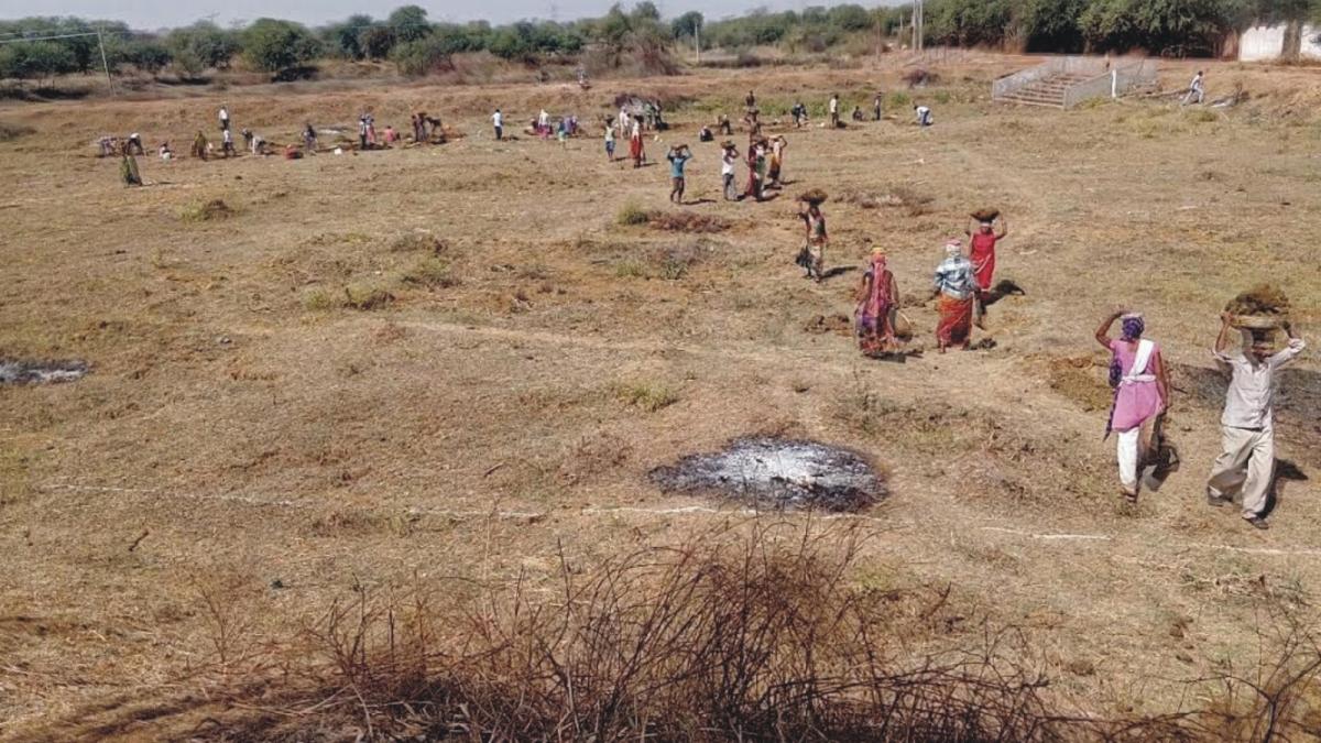 बुरहानपुरः वन विभाग के 'रूट शूट' में लाखों का घोटाला