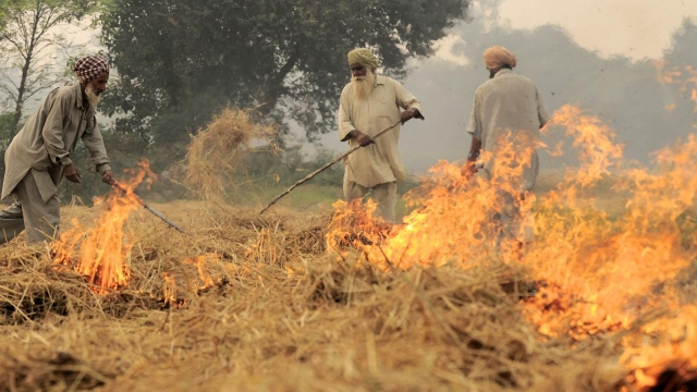 As Smog Chokes Capital, SC Cracks Down On Punjab, Haryana And UP Governments Over Inability To Curb Stubble Burning