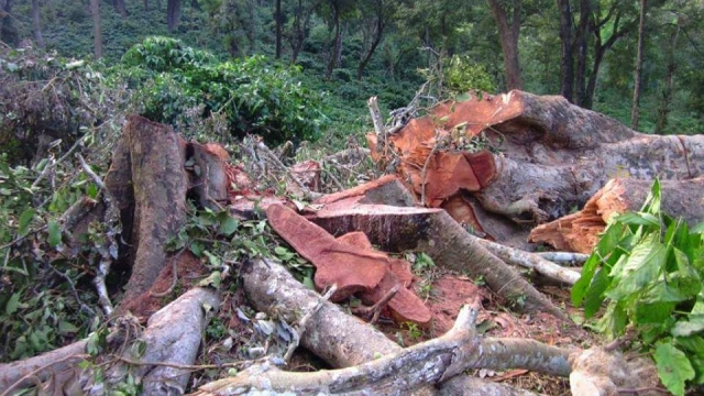 Despite Protests, Kerala Electricity Board To Lay Supply Line Through 200 Hundred Year Old Sacred Forest In Santhivanam