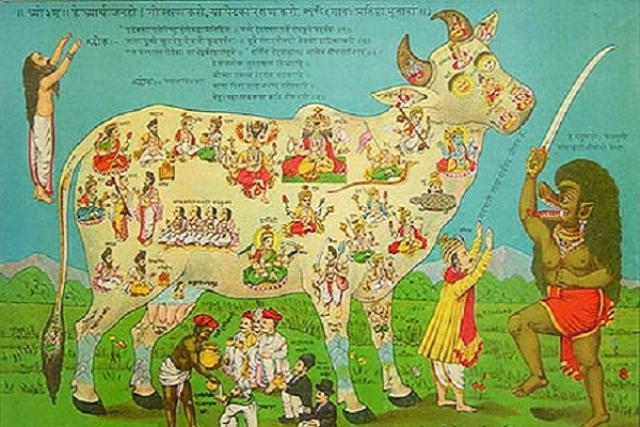 Cow Slaughter And  Hindu Persecution In The Indian Subcontinent: A Short History