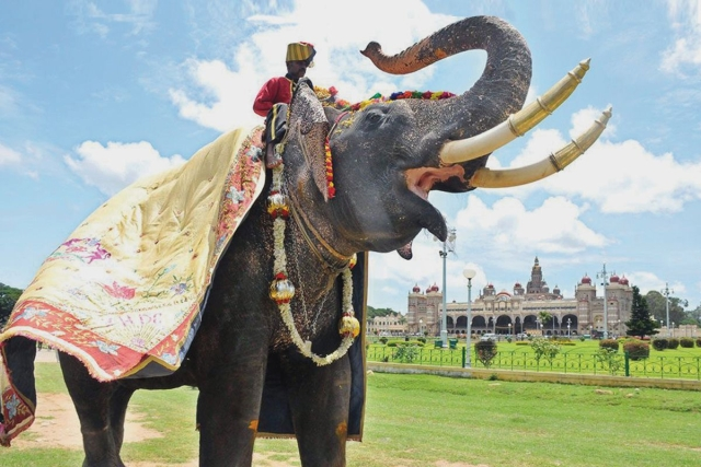 A Penance Of 16 Years: How Arjuna The Mysuru Ambari Elephant Came Back To Be The Hero Of Dasara
