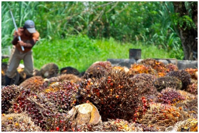 India Cancels Palm Oil Imports From Nepal, Bangladesh; Signals Tough Action Against Misuse Of Free Trade Agreement