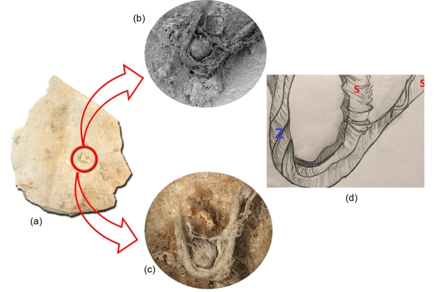 a. Neanderthal artefact G8 128 showing the chord b.SEM of chord fragment c.3D Hirox photo of cord fragment d.schematic drawing illustrating artificial s and Z twist [From 'Direct evidence of Neanderthal fibre technology and its cognitive and behavioral implications', nature.com, Scientific Reports]