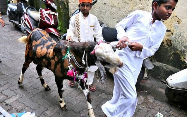 """Obligatory Upon The Muslim Faithful To Perform The Sacrifice Of Goats"" -Maharashtra Cong Urges CM To Allow Bakri-Eid"